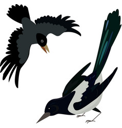 flying crow circuit birds raven rook magpie vector image