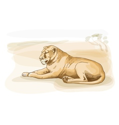 lion watercolor style vector image vector image