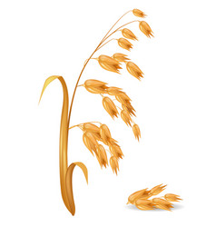 Oat ear plant with pile of grains vector