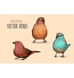 Exotic birds hand vector