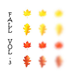 falling realistic oak and maple leaves set with vector image