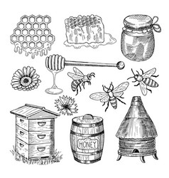 Honey bee honeycomb and other thematically hand vector