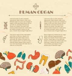 Human organs background vector