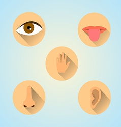 Senses icons vector