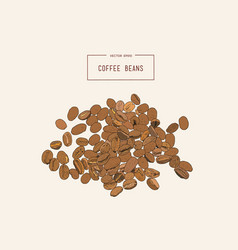 coffee beans hand pencil sketch vector image