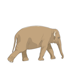 isolated brown elephant animal character walking vector image vector image