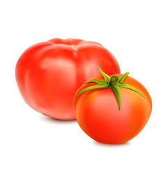 red whole tomatoes isolated on a white background vector image vector image