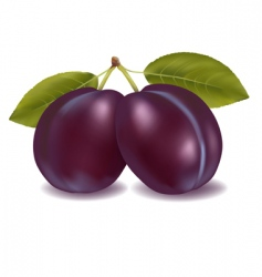 two plums vector image