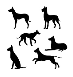 Breed of a dog great dane silhouettes vector