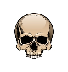 Colored human skull without lower jaw vector