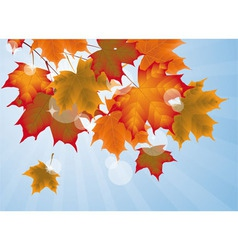 autumn maple leaves vector image