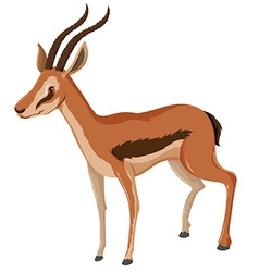 Antelope with sharp horns vector
