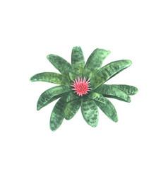 aechmea fasciata flower vector image
