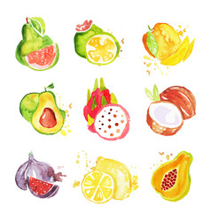 Set of tropical colorful watercolor fruits vector