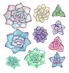 Watercolor succulent set on white background vector