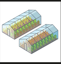 Big transparent greenhouses with vegetables beds vector