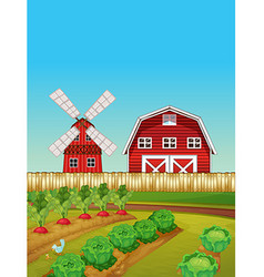 Farm scene with vegetable garden and barn vector