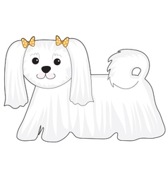 Maltese dog vector