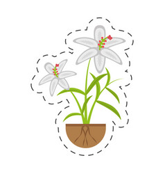 Crocus flower petal leaf grow vector