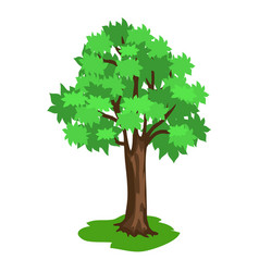 Green tree with broad brunches and brown trunk vector