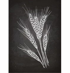 chalk sketch of ears of wheat vector image