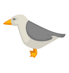 seagull isolated on white colorful graphic vector image vector image