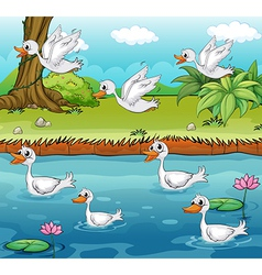 Swimming and flying ducks vector