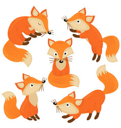 set of isolated cute foxes part 1 vector image