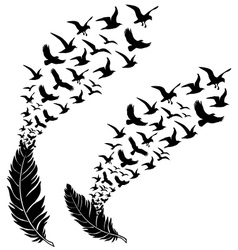 Feathers with flying birds vector