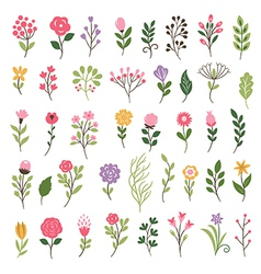 Colorful floral collection with leaves and flowers vector