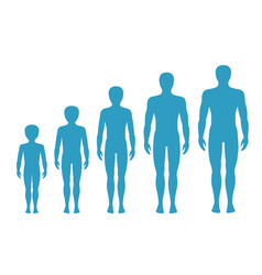 mans body proportions aging vector image vector image