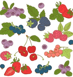 Set of Outline hand drawn berries blackber vector image
