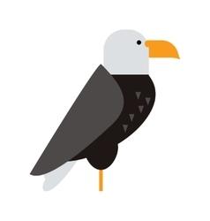 Eagle raptor wildlife bird vector image