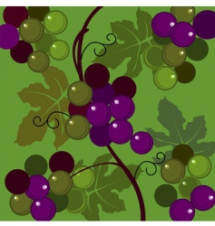 grapes and leaves vector image