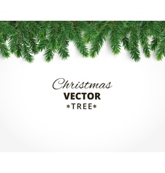 Background with christmas tree branches and vector