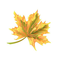 Colored autumnal leaf maple on a white background vector