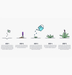 growing stages of plant vector image