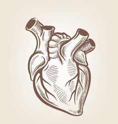 Medical heart vector