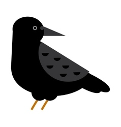 Carrion crow raven vector image vector image