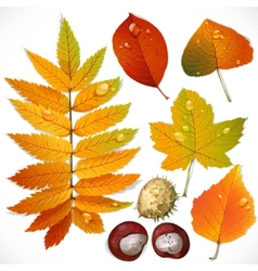 Yellow and red autumn leaves and chestnut vector