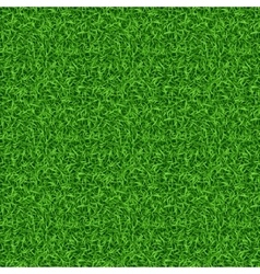 Seamless green grass pattern vector