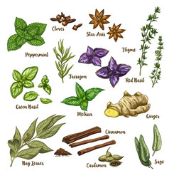 Full color of herbs and spices vector