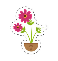Pink cosmos flower growing vector