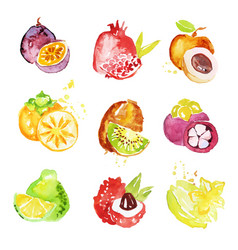 Set of colorful watercolor fruits vector