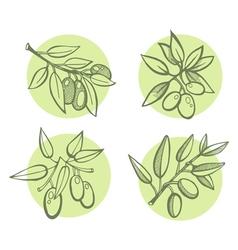 olives vector image