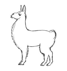 Lama animal from south america vector