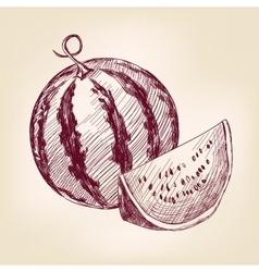 Watermelon hand drawn llustration realistic vector