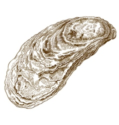 Engraving oyster shell vector