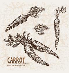 digital detailed line art carrot vector image vector image