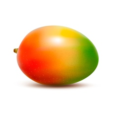 Mango isolated on white vector image